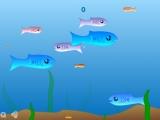 flash игра Прожорливая рыбка