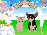 Flash игра Cat and Dog