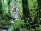 Flash игра Hidden Zebra