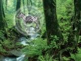 Hidden Zebra