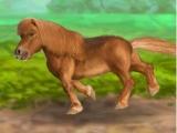 My Dear Pony
