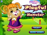 Playful Hamster