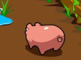 Paddy the Pig
