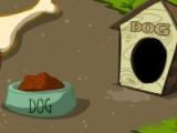 Puppy`s yard