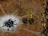 Arachnid Wars