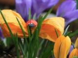 Hidden Spring Stones