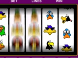 Birds Of A Feather Slots