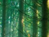 Hidden targets forest
