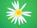 flash игра Daisy petals